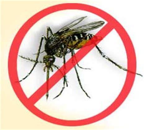 Dengue Fever Essay - 541 Words Major Tests